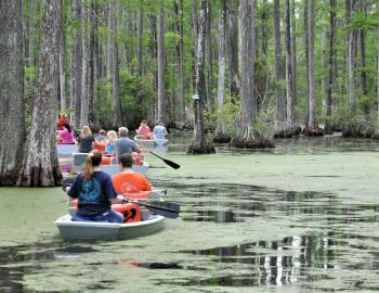 """Into America's Wild"" features Cypress Gardens in Berkeley County, among other local tourist attractions."
